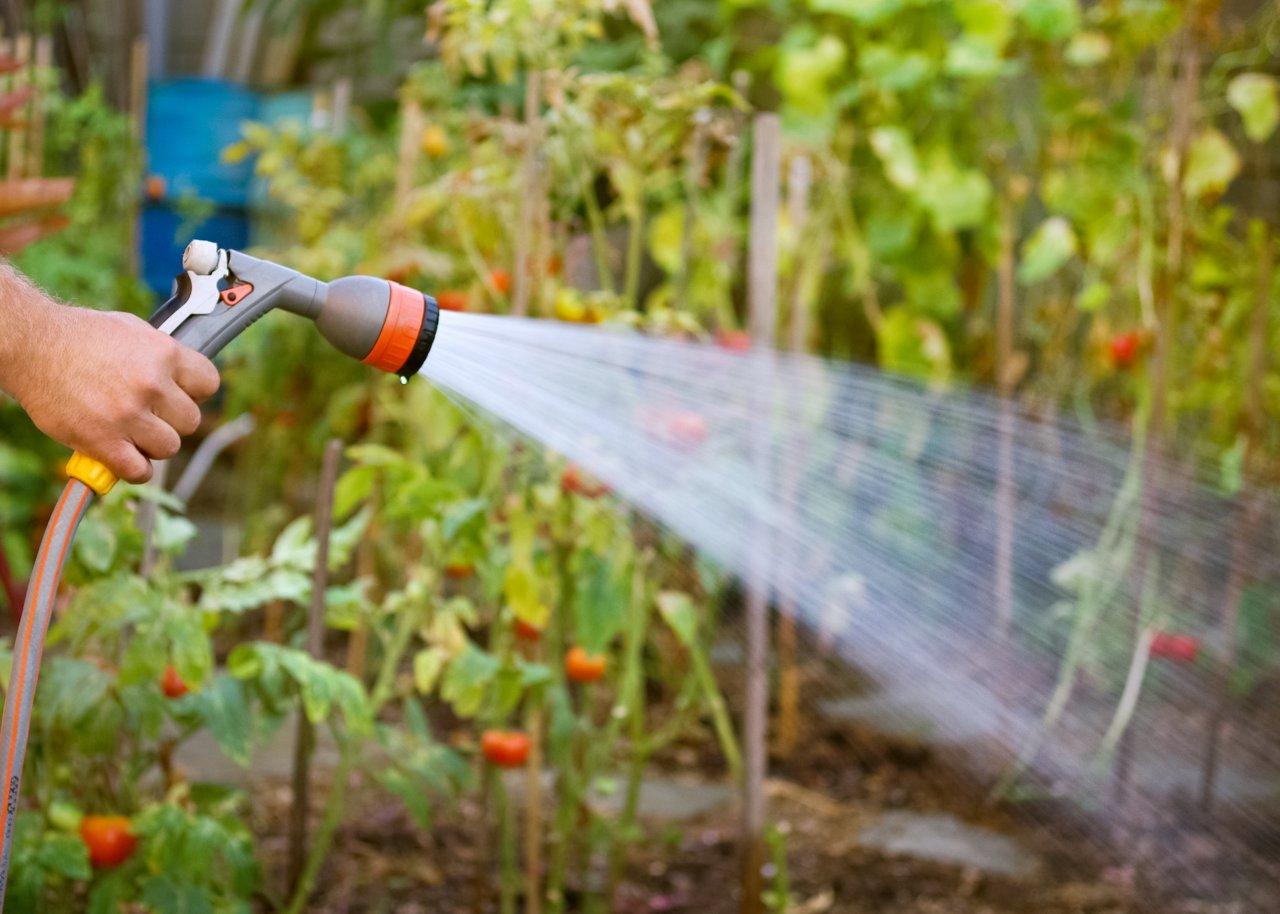 Картинки по запросу watering your garden